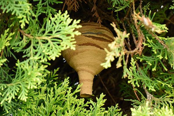 とっくりのようなコガタスズメバチの巣